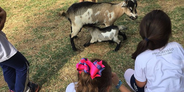 Zooparque Itatiba | Ensino Fundamental Taubaté